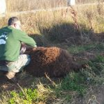 Αρκούδα 250 κιλών νεκρή σε τροχαίο στην Μεσοποταμία Καστοριάς