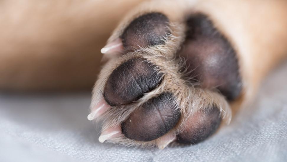 Νομοσχέδιο για ζώα συντροφιάς: Ψηφίστηκε επί της αρχής – Οι απόψεις των φορέων